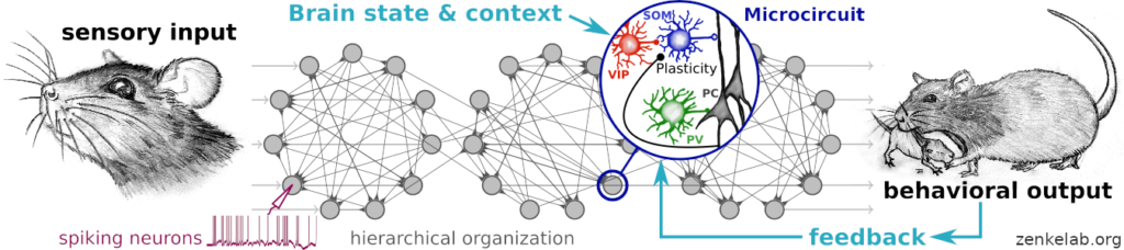 Hiring: Context-dependent information processing in biological neural networks